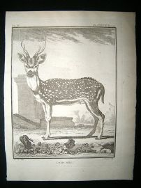 Buffon: C1770 Male Axis, Spotted Deer, Antique Print